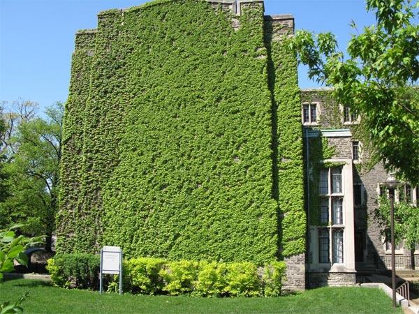 murs-vegetaux